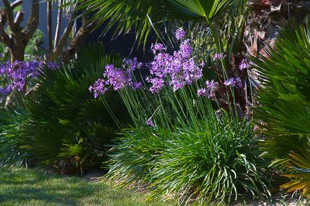 Jardins bretons bord de mer jardin zen ou exotique sarl for Paysagiste jardin exotique